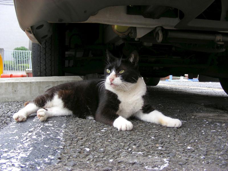 車の下の黒白猫1