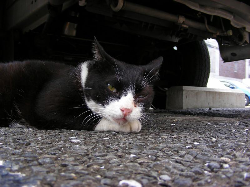 車の下の黒白猫3