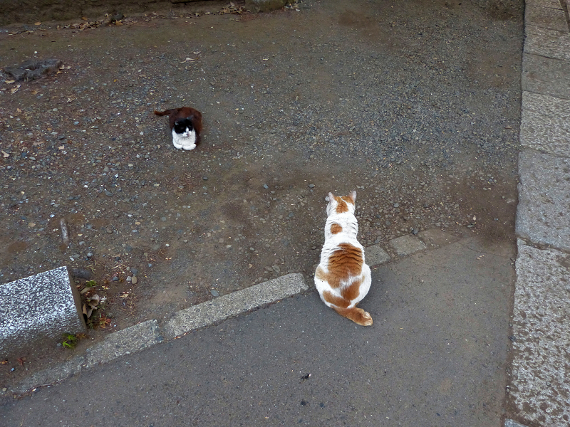 微妙な距離の猫たち