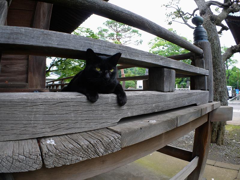 欄干の間から猫パンチを出す黒猫1