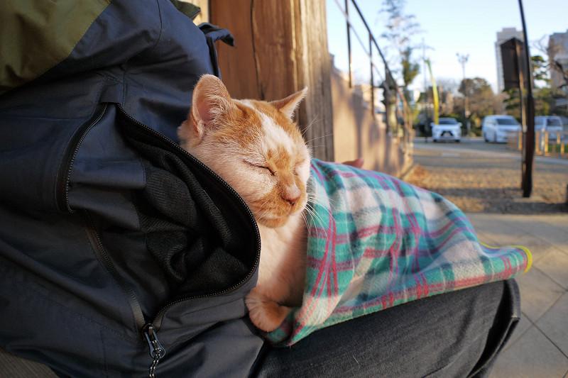 ブランケットにくるまって寝る茶白猫1