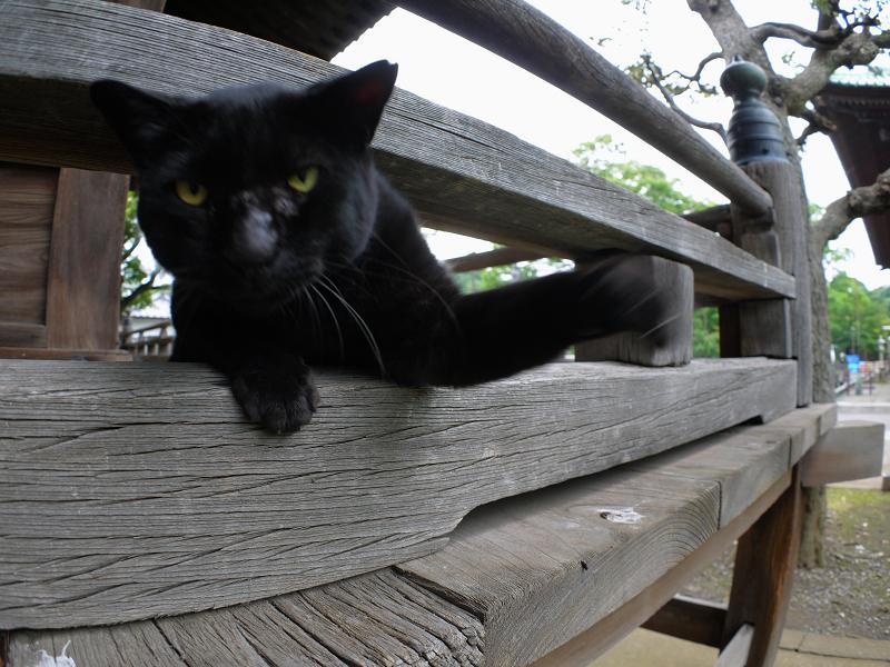 欄干の間から猫パンチを出す黒猫2