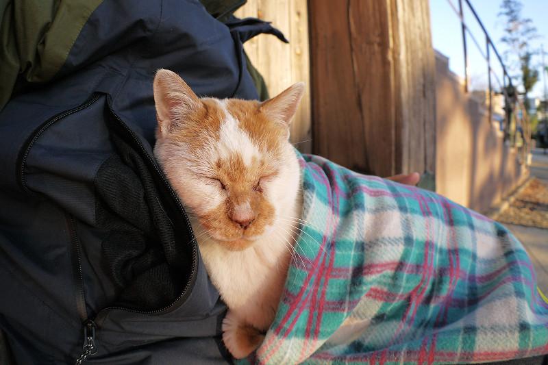 ブランケットにくるまって寝る茶白猫2