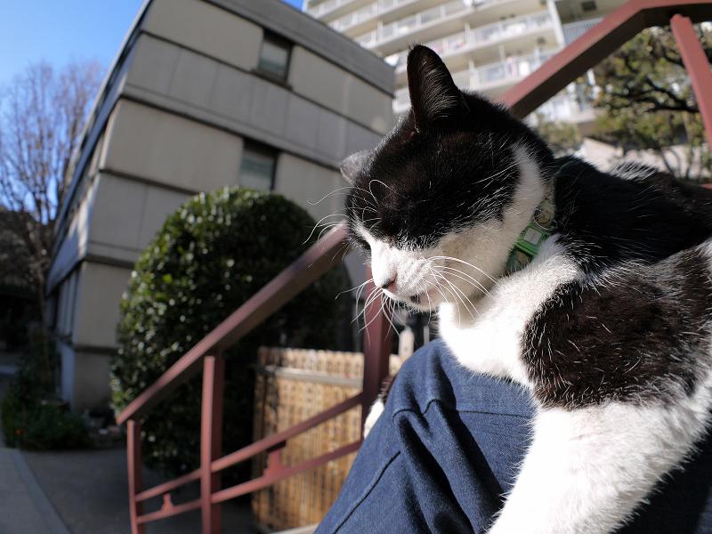 膝でのんびりしてる黒白猫1