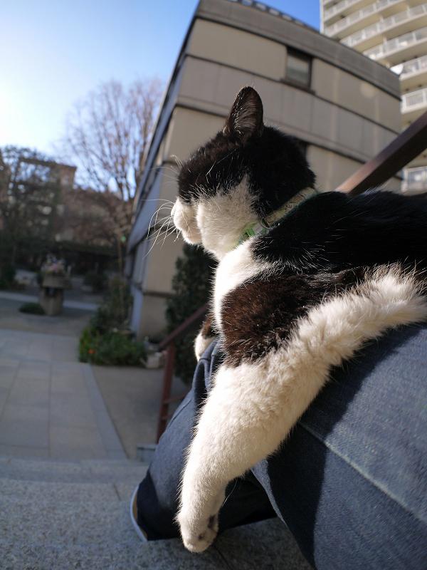 膝でのんびりしてる黒白猫3