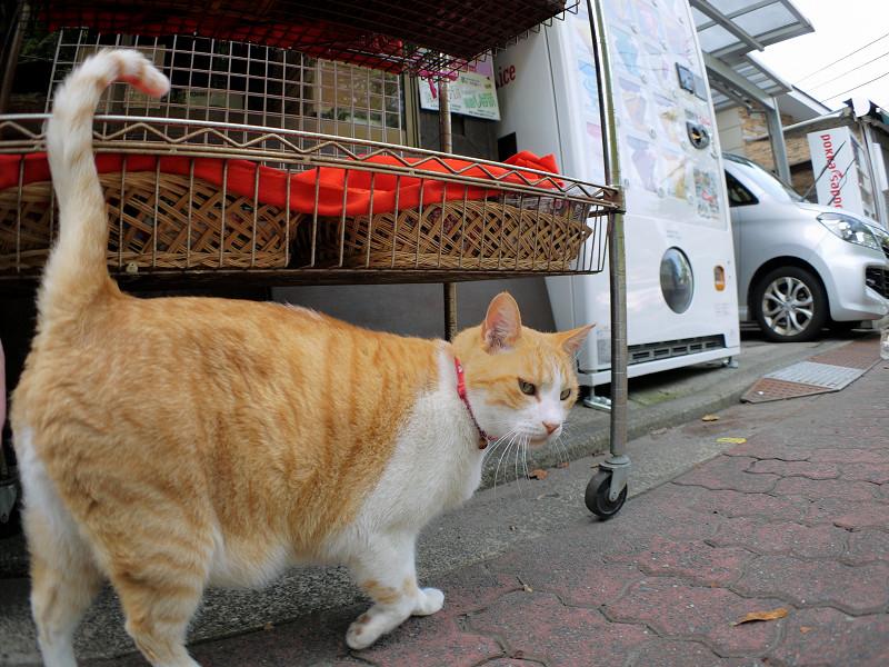 お店の前の茶白猫1