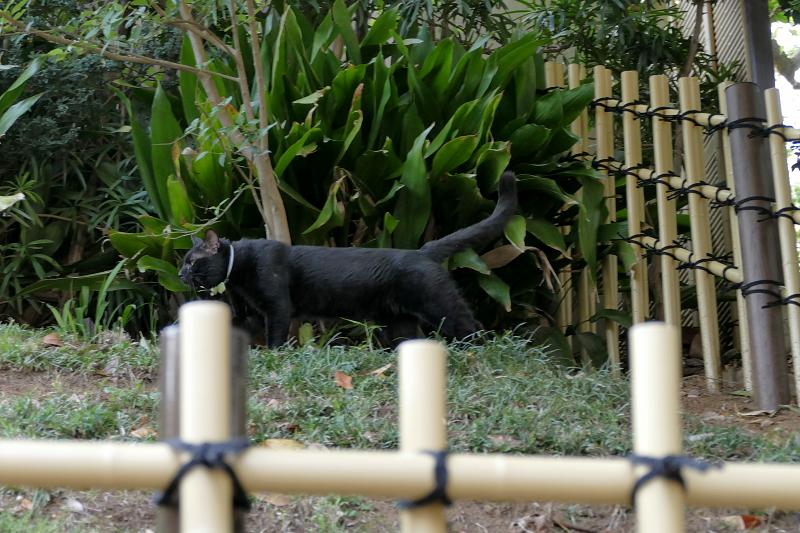 斜面を歩く黒猫1