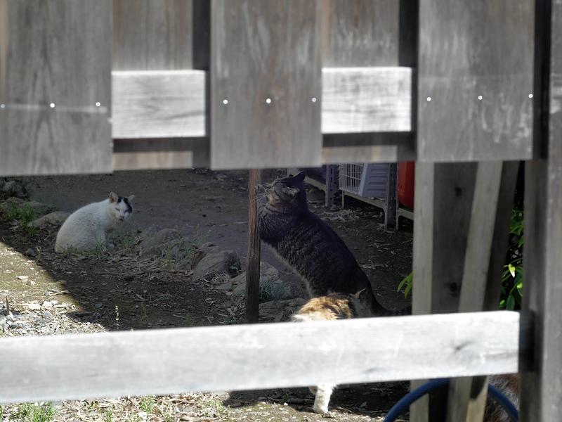 柵の中の猫たち1