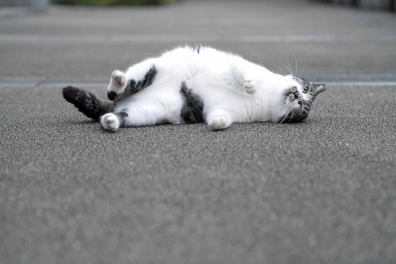回転しているキジ白猫2