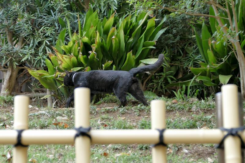 斜面を歩く黒猫2