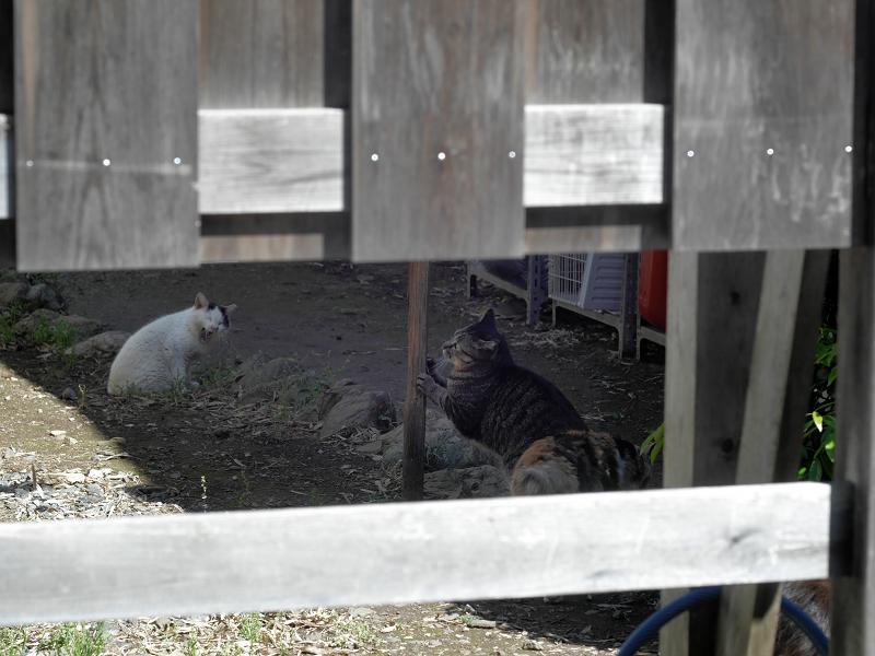 柵の中の猫たち2