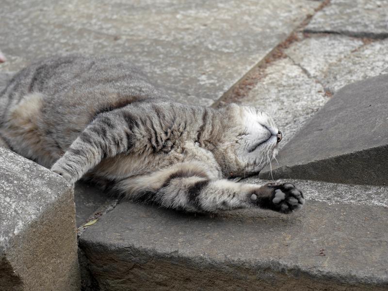 縁石に体や顔を擦り付けるキジトラ猫2