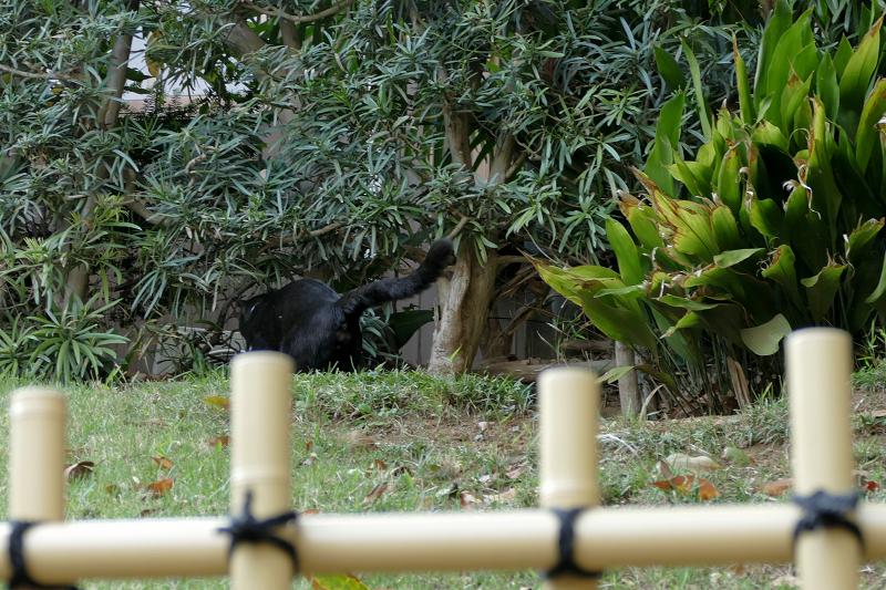 斜面を歩く黒猫3