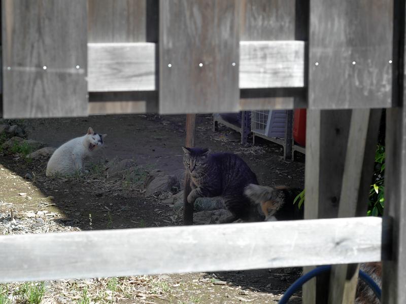 柵の中の猫たち3