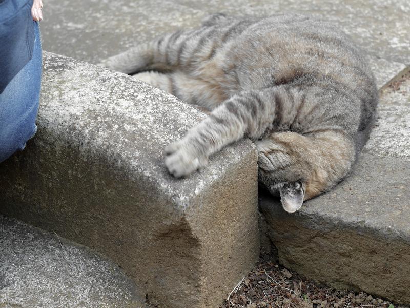 縁石に体や顔を擦り付けるキジトラ猫3