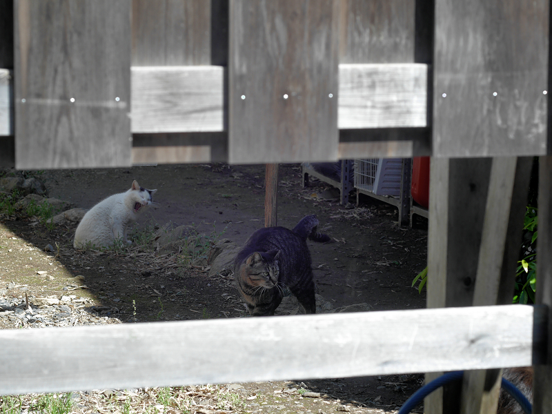 柵の中の猫たち4