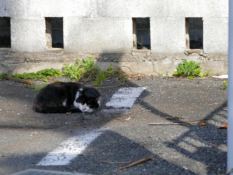 金網駐車場の黒白猫1