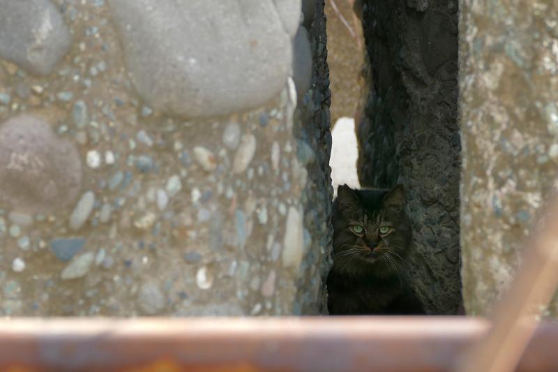 大きな岩ブロックの間の猫