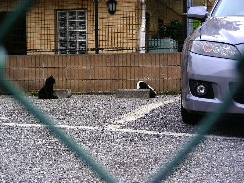駐車場の猫たち1