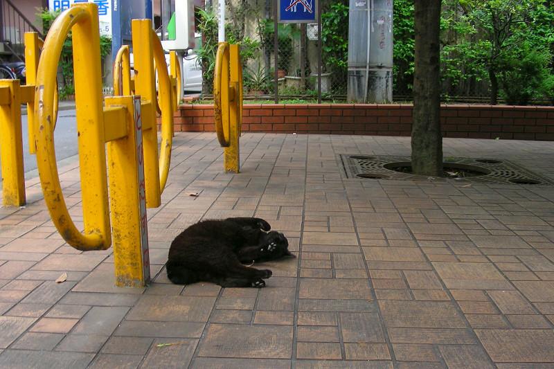 公園で仰向けになってる黒猫1