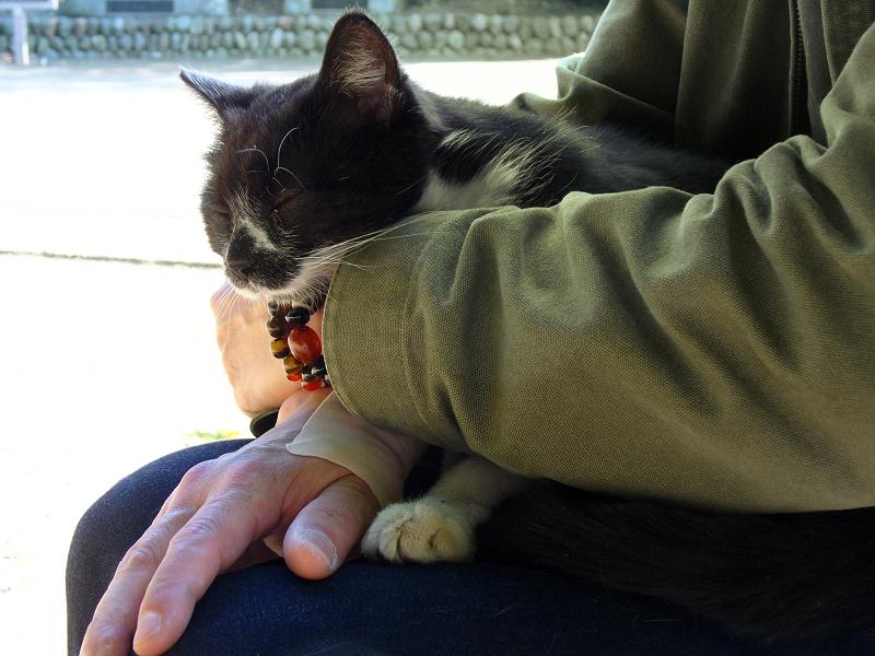 膝の上で抱え込んだ黒白猫1