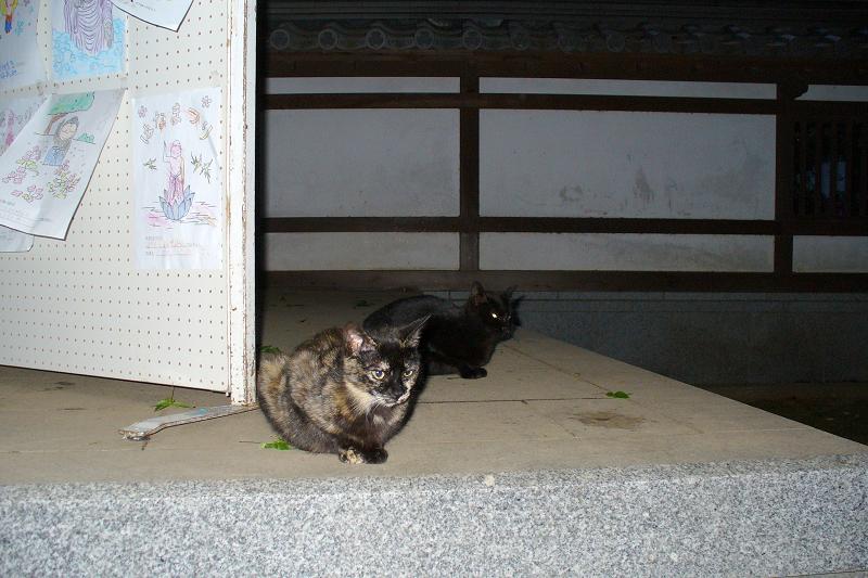 夜の境内の猫1