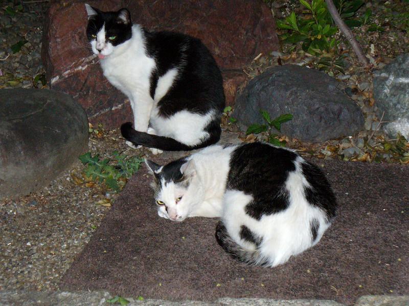 日が暮れた猫たち