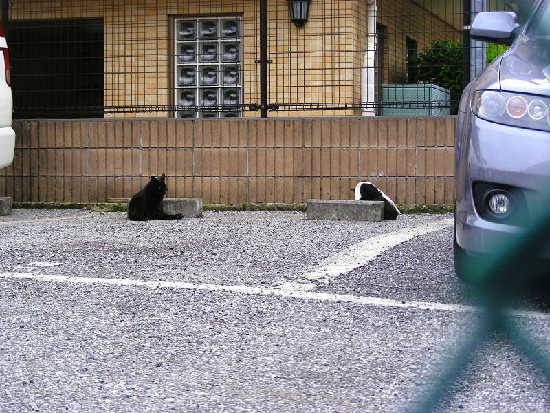駐車場の猫たち2