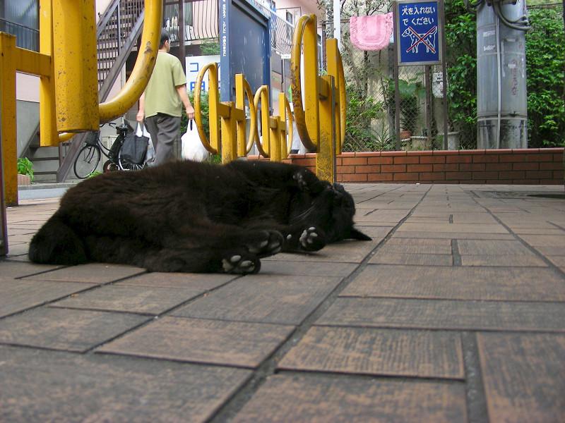 公園で仰向けになってる黒猫2