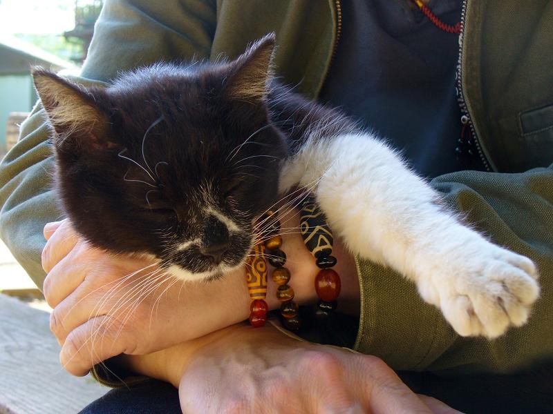 膝の上で抱え込んだ黒白猫2