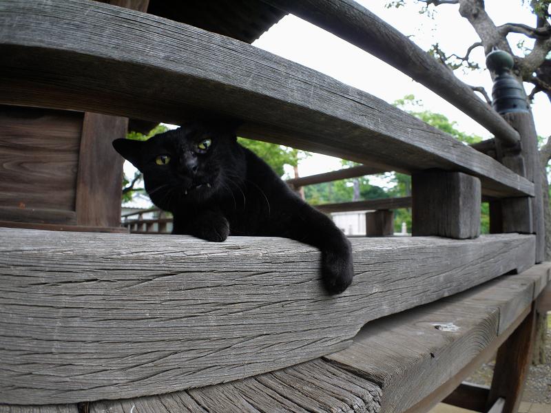 欄干の間で欠伸をする黒猫1