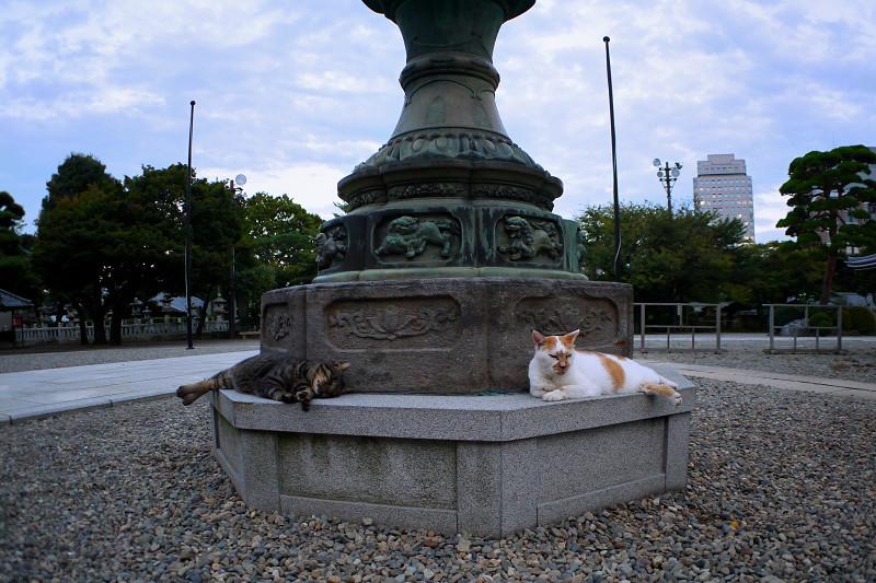 灯籠と猫たち