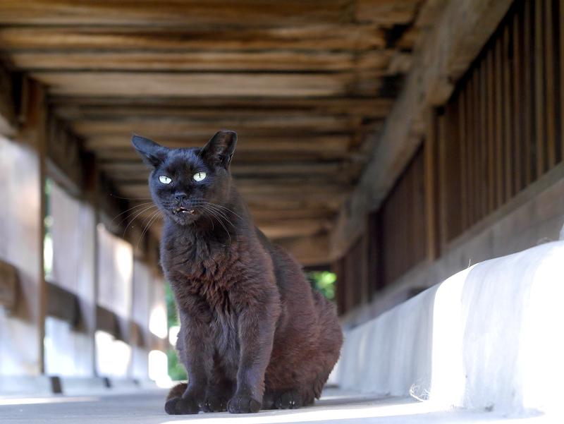 お堂縁の下の黒猫1
