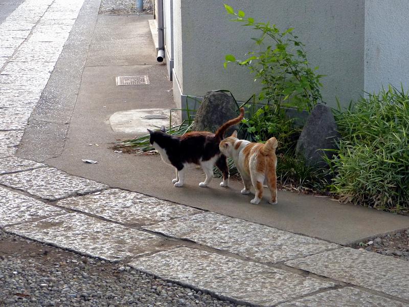 仲良しになった猫たち2