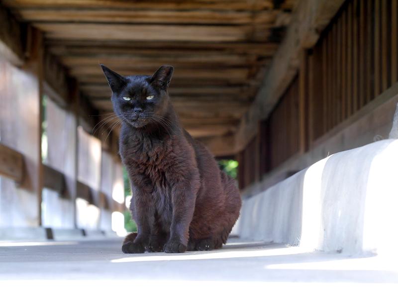 お堂縁の下の黒猫2