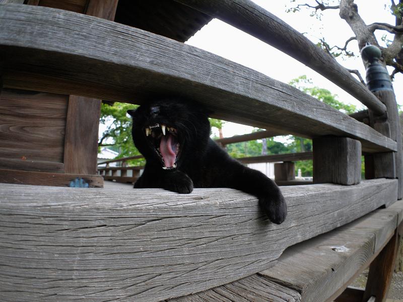 欄干の間で欠伸をする黒猫3