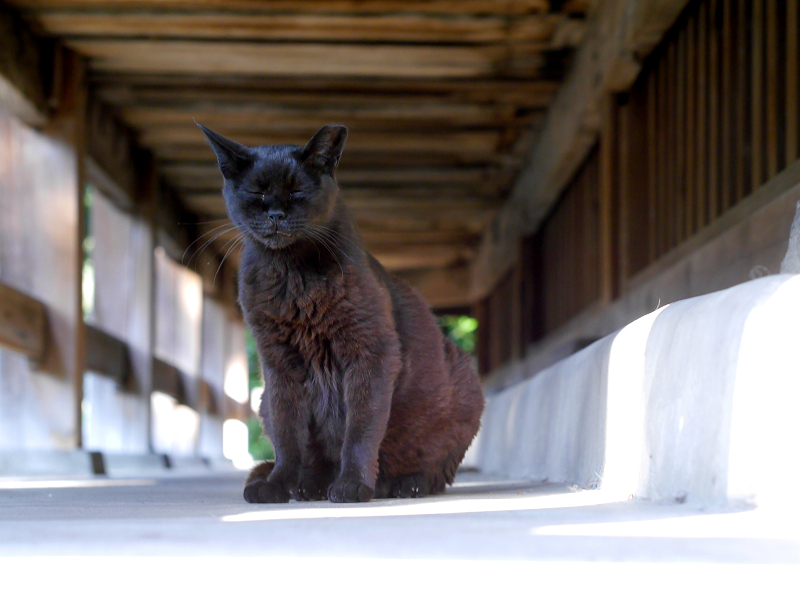 お堂縁の下の黒猫3