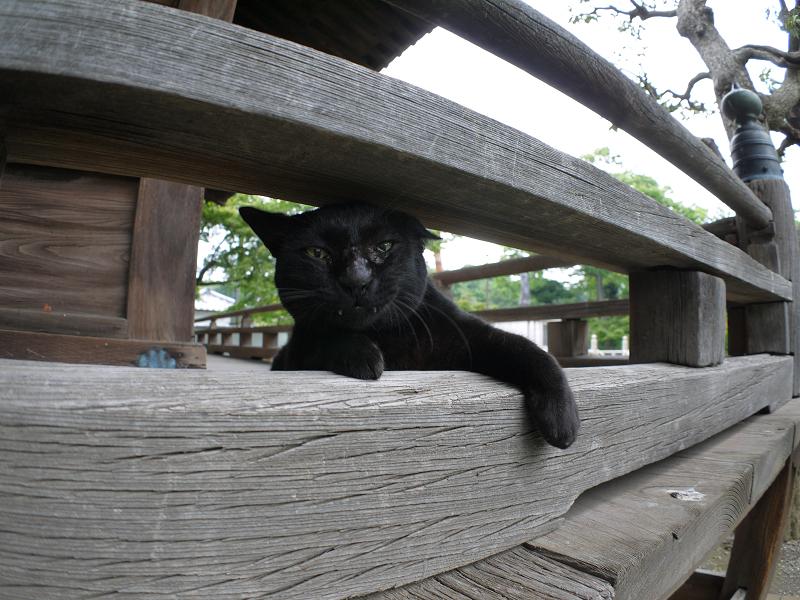 欄干の間で欠伸をする黒猫5