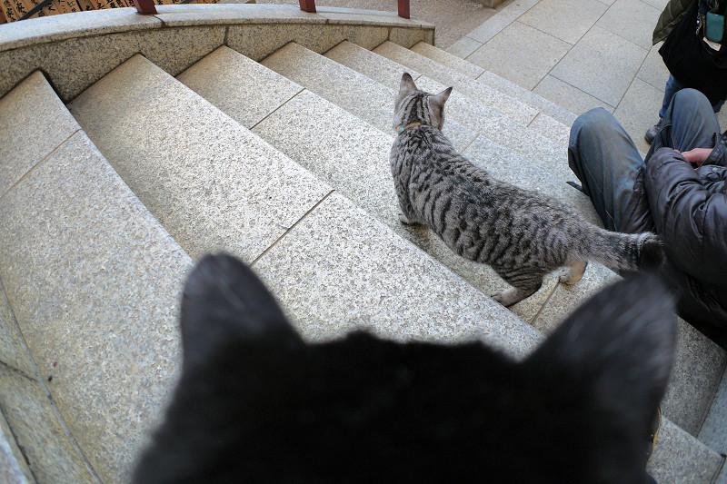 階段のサバトラ猫