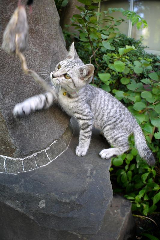 石碑に登ろうとするサバトラ仔猫2