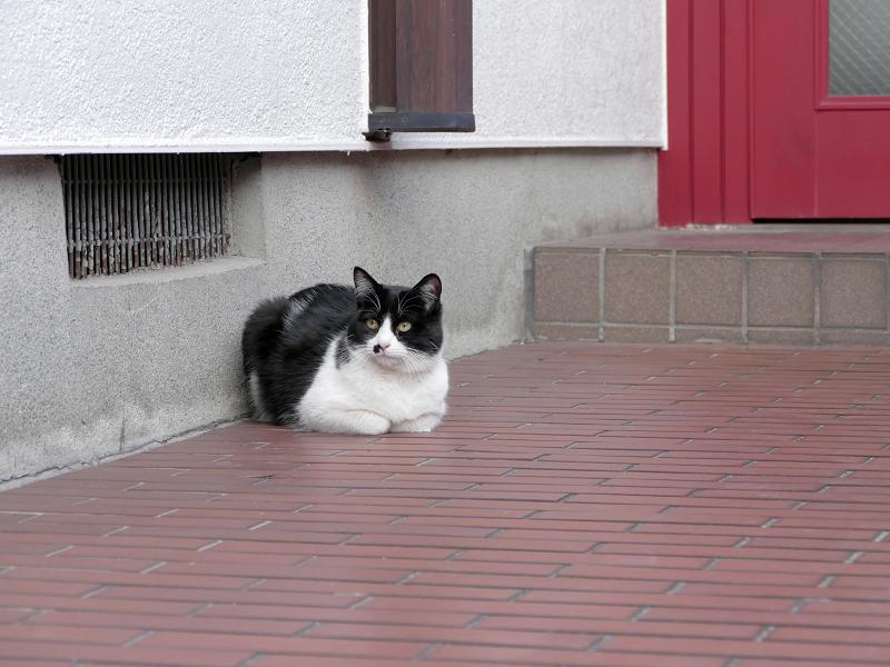玄関先香箱の黒白猫1