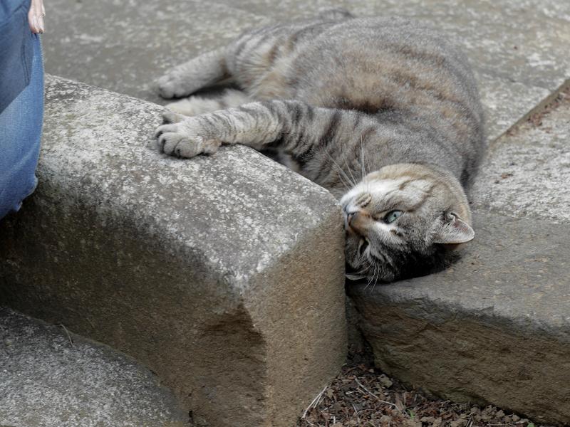縁石に擦りつけるキジトラ猫1