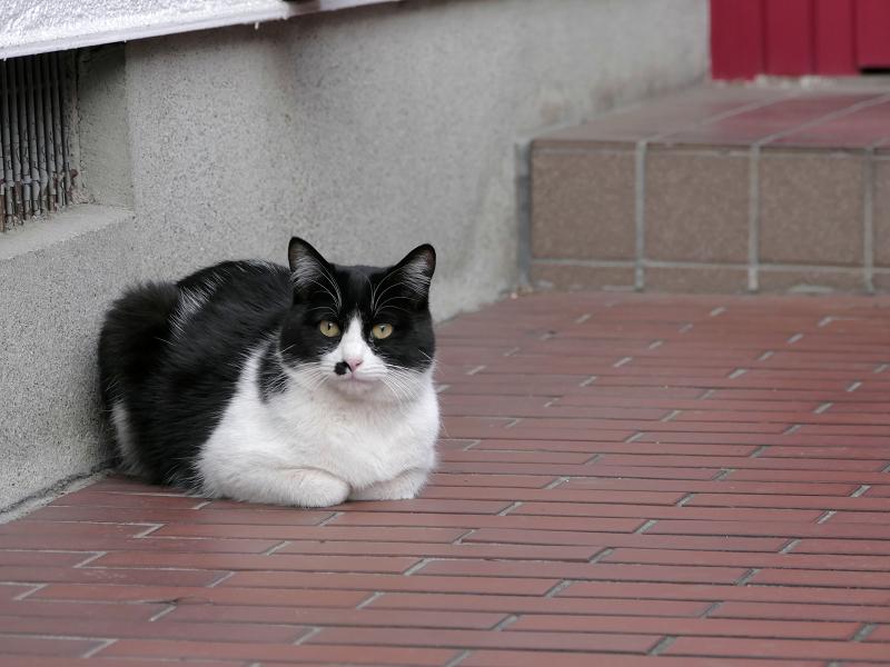 玄関先香箱の黒白猫2