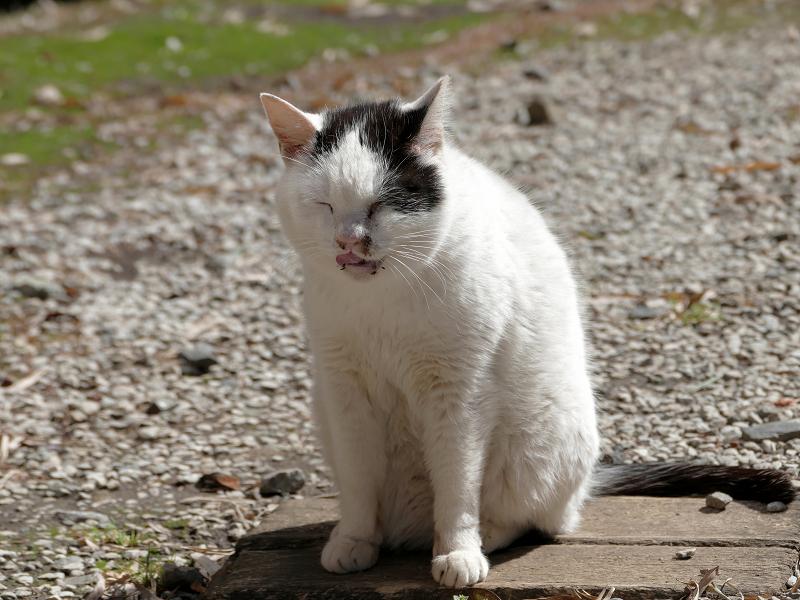 日向境内の白黒猫3