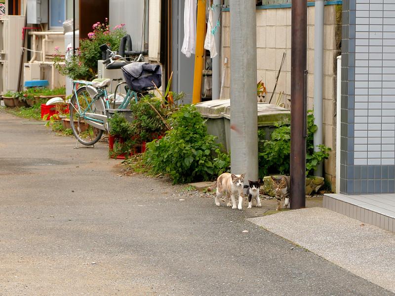 道端を歩く親子猫1