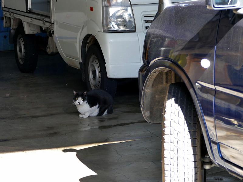 屋根付き駐車場の黒猫1