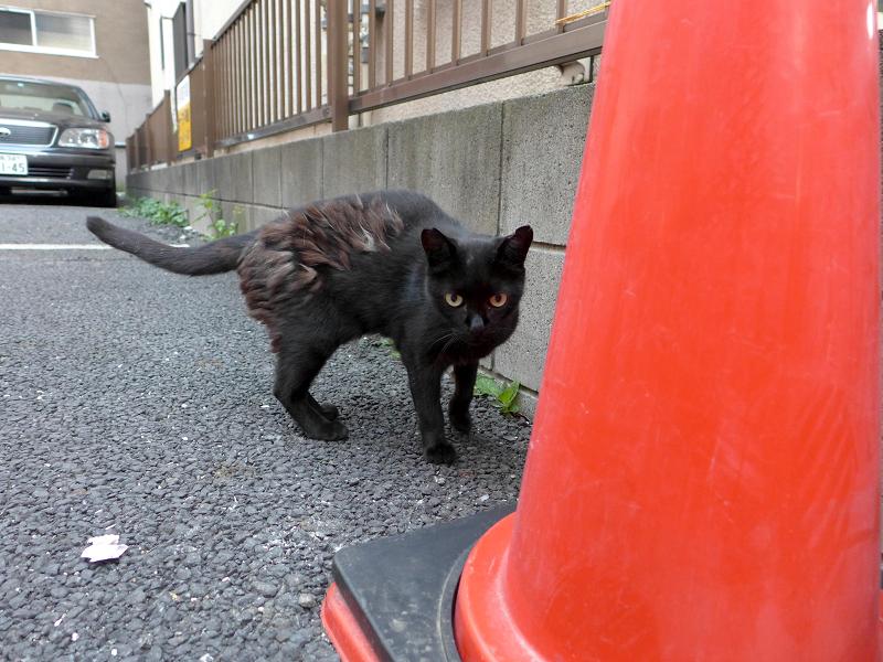 コンクリート上の黒猫2