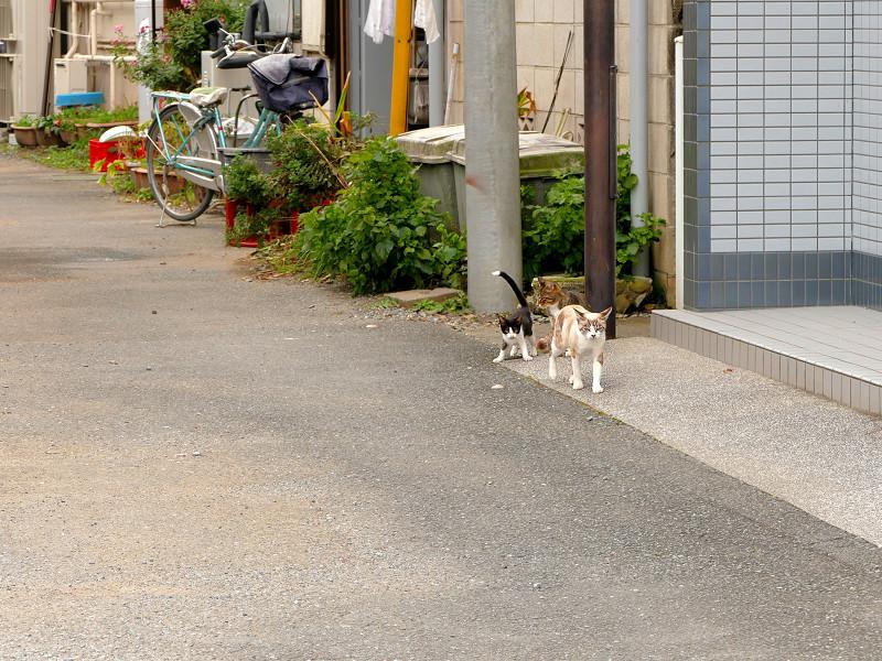 道端を歩く親子猫2