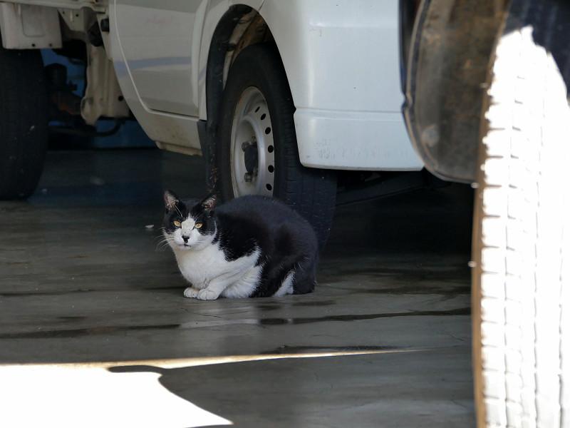 屋根付き駐車場の黒猫2
