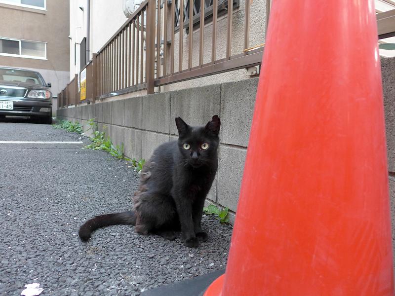 コンクリート上の黒猫3